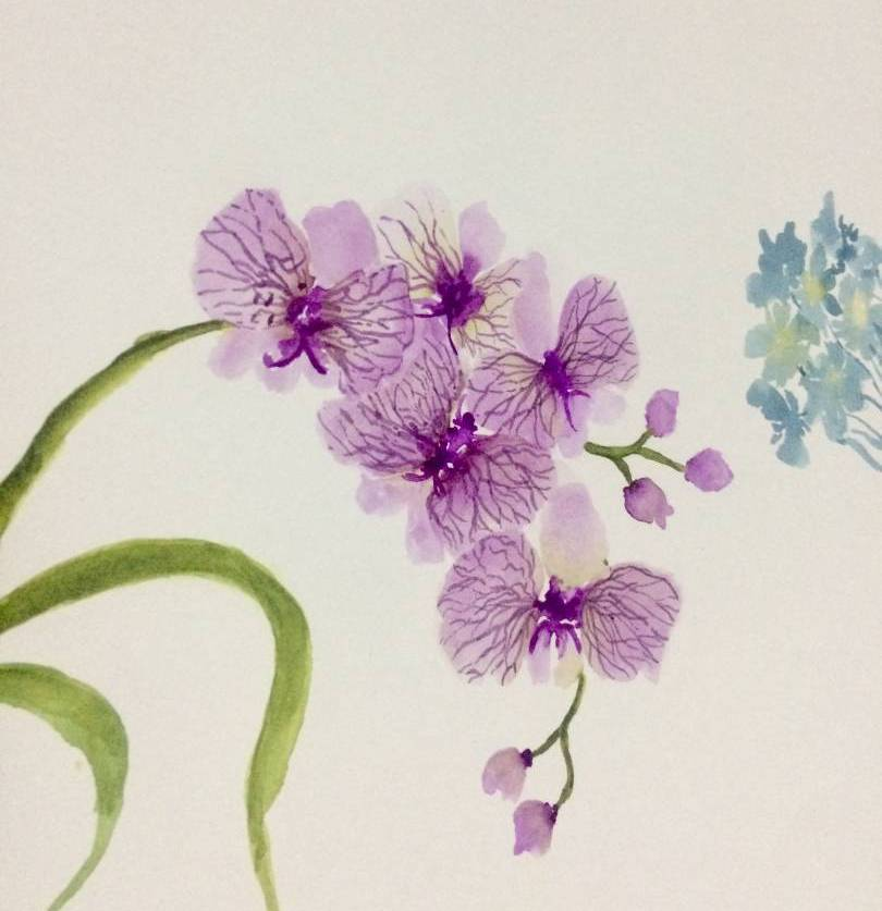 Learn The Basic Of Botanical Illustration On Orchid Painting