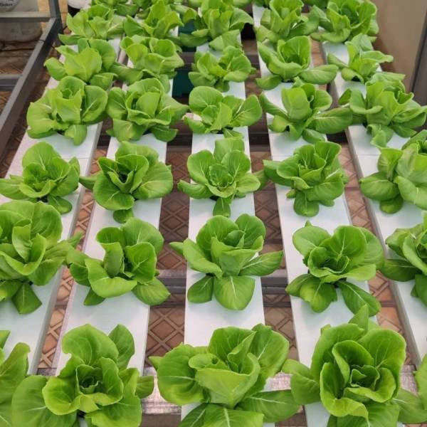Learn All About Basic Hydroponic